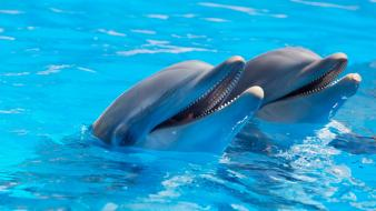Water dolphins mammals wallpaper