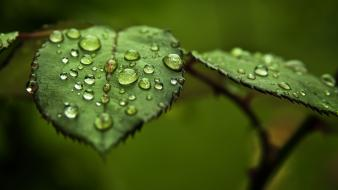 Water nature leaves macro blurred background drops wallpaper