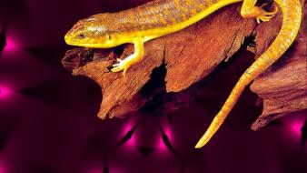 Yellow wall golden skink simple wallpaper