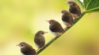 Birds animals low resolution baby wallpaper