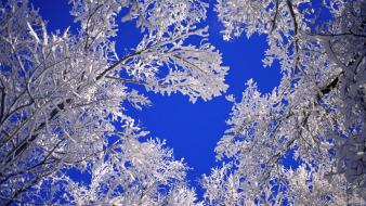 Frosted Trees wallpaper