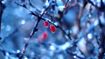 Frozen Fruits In Winter wallpaper