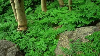 Green Contrast Forest wallpaper