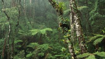 Montane Rainforest Wallpaper