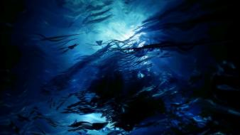 Ocean fish sunlight underwater wallpaper