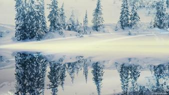 Snow trees reflections evergreens wallpaper