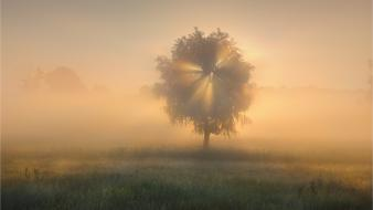 Sun grass landscapes light mist wallpaper