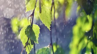 Water nature rain birch wallpaper