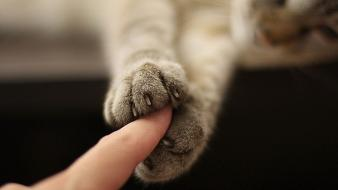 Cats animals fingers friendship paws touching Wallpaper