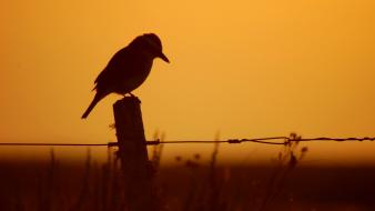 Fences silhouette monochrome birds wallpaper