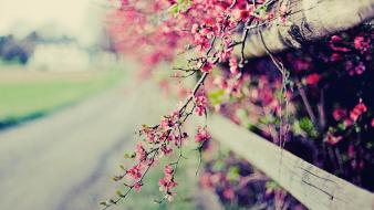 Flowers fences bokeh pink wallpaper