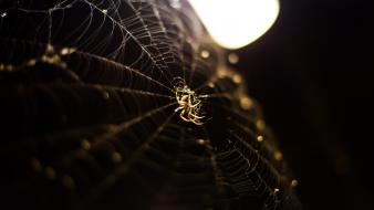Insects bokeh spiders depth of field spider webs wallpaper