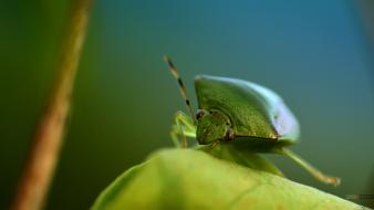 Insects macro photography Wallpaper