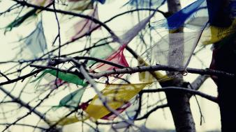 Multicolor depth of field branches cloths windy wallpaper