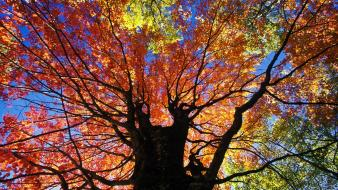 Nature trees autumn (season) red west virginia wallpaper