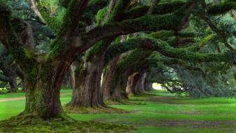 Nature trees live alley plantation oak louisiana wallpaper