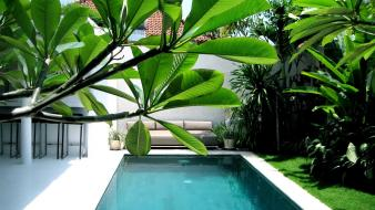 Plants swimming pools wallpaper