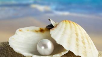 Sand shells pearls oysters wallpaper
