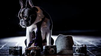 Animals dogs cameras french bulldog Wallpaper