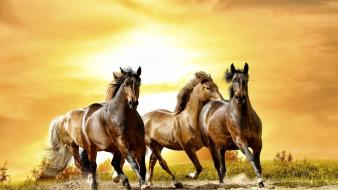 Animals horses sunlight running wallpaper