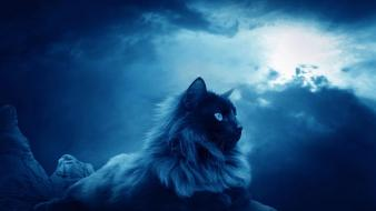 Clouds night cats wallpaper