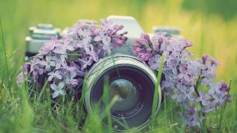 Flowers cameras wallpaper