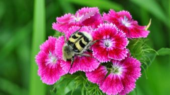 Flowers insects wallpaper