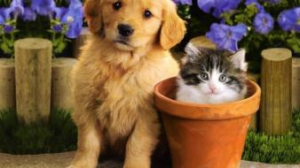 Flowers puppies kittens wallpaper