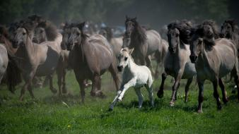 Horses baby animals Wallpaper