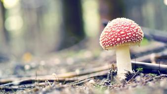 Landscapes forest mushrooms plants amanita muscaria wallpaper