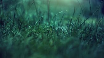 Nature grass depth of field blurred wallpaper