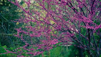 Nature trees flowers pink flowered Wallpaper