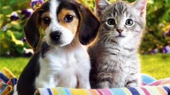 Puppies kittens wallpaper