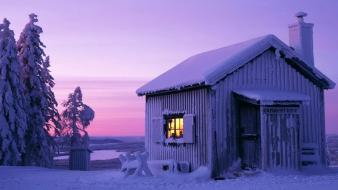Winter snow trees sweden moonlight cabin wallpaper