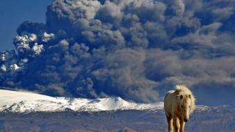 Animals volcanoes national geographic horses iceland eruption Wallpaper