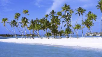 Beach islands palm trees india Wallpaper