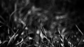 Black and white nature dark grass wallpaper