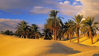 Desert oasis tunisia wallpaper