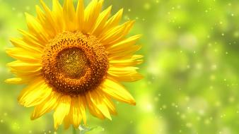 Green nature artistic sparks sunflowers wallpaper