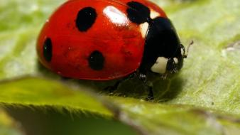 Green nature insects grass ladybirds the leaf of wallpaper