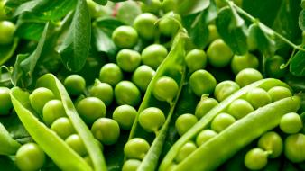 Green vegetables peas wallpaper