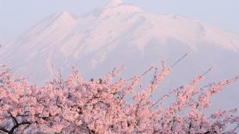 Japan mountains cherry blossoms flowers spring (season) wallpaper