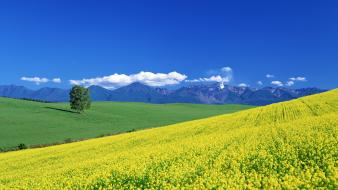 Japan mountains landscapes flowers fields yellow Wallpaper
