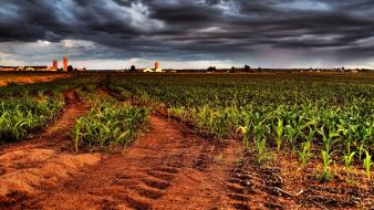 Landscapes nature fields overcast cornfield wallpaper