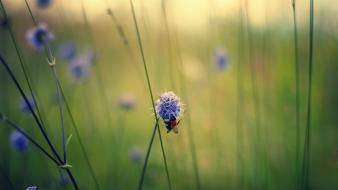 Landscapes nature minimalistic flowers wallpaper