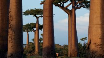 Landscapes nature trees madagascar national geographic baobab wallpaper