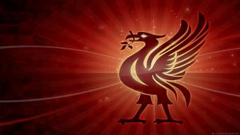 Liverpool fc lfc liverbird wallpaper