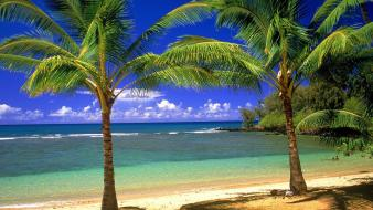 Nature beach palm trees wallpaper