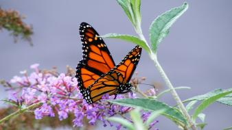 Nature flowers insects leaves butterflies wallpaper