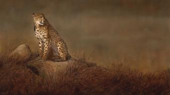 Paintings animals cheetahs wallpaper